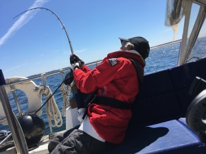 Catching salmon while trolling from a sailboat.